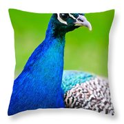 Beautiful And Pride Peacock On A Lawn Throw Pillow