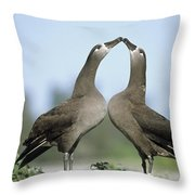 Black-footed Albatross Phoebastria Throw Pillow
