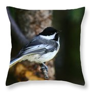 Blackcapped Chickadee Throw Pillow