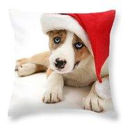 Border Collie Puppy Throw Pillow by Jane Burton