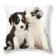 Boreder Collie Puppies Throw Pillow