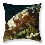 Broadclub Cuttlefish, Papua New Guinea Throw Pillow