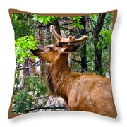 Browsing Elk In The Grand Canyon Throw Pillow