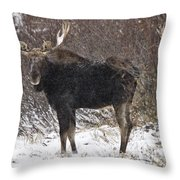 Bull Moose In Winter Throw Pillow