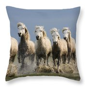 Camargue Horse Equus Caballus Group Throw Pillow