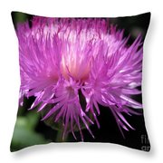 Centaurea From The Sweet Sultan Mix Throw Pillow