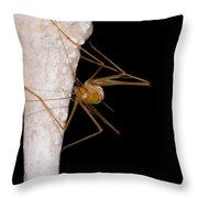 Chinese Cave Cricket Throw Pillow