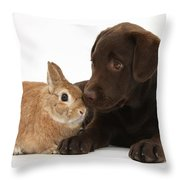 Chocolate Labrador Pup Throw Pillow