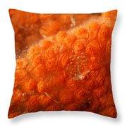 Close-up Of Live Sponge Throw Pillow