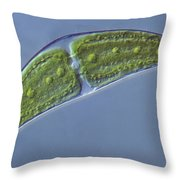 Closterium Sp. Algae Lm Throw Pillow by M. I. Walker