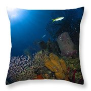 Coral And Sponge Reef, Belize Throw Pillow