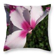 Cyclamen Named Victoria Throw Pillow