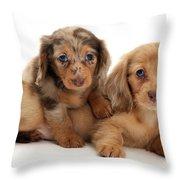 Dachshund Pups Throw Pillow
