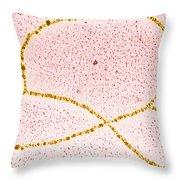 Dna Plasmid Throw Pillow