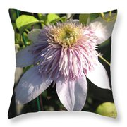 Double Clematis Named Empress Throw Pillow