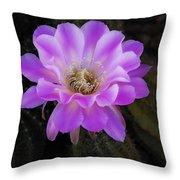 Echinopsis Aurea  Throw Pillow