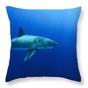 Female Great White Shark, Guadalupe Throw Pillow