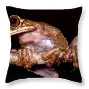 Fringe Limb Tree Frog Throw Pillow