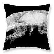 Giant Isopod, X-ray Throw Pillow