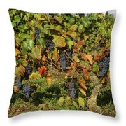Grapes Growing On Vine Throw Pillow