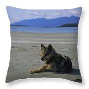 Gray Wolf On Beach Throw Pillow