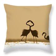 Greater Flamingo Phoenicopterus Ruber Throw Pillow
