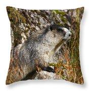 Hoary Marmot Throw Pillow