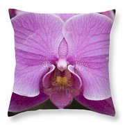 Hybrid Orchids At The Atlanta Botanical Throw Pillow