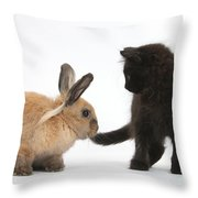 Kitten And Young Rabbit Throw Pillow