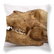 Kodiak Bear Skull Throw Pillow