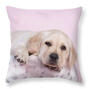 Lab In Pink Throw Pillow
