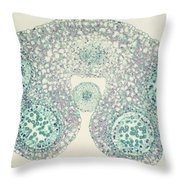 Lily Anther Lm Throw Pillow