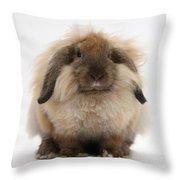 Lionhead-lop Rabbit Throw Pillow