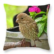 Little Girl Finch Throw Pillow