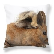 Long-haired Guinea Pig And Young Rabbit Throw Pillow