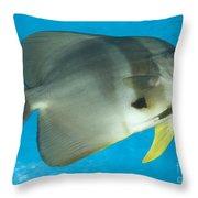 Longfin Spadefish, Papua New Guinea Throw Pillow