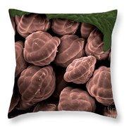 Male Fern Sporangia, Sem Throw Pillow