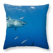 Male Great White Shark And Bait Fish Throw Pillow