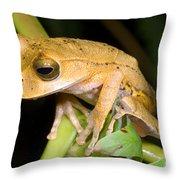 Marsupial Frog Throw Pillow