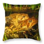 Mating Toads Throw Pillow