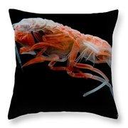 Mesopelagic Amphipod Throw Pillow