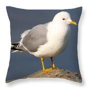 Mew Gull Throw Pillow