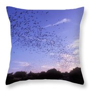 Mexican Freetail Bats Throw Pillow