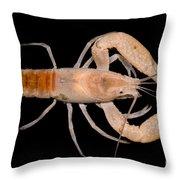 Miami Cave Crayfish Throw Pillow