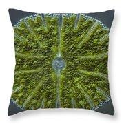 Micrasterias Sp. Algae Lm Throw Pillow