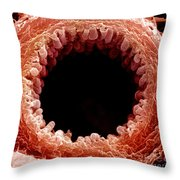 Mouse Bronchiole, Sem Throw Pillow by Science Source