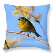 Orangecrowned Warbler Throw Pillow