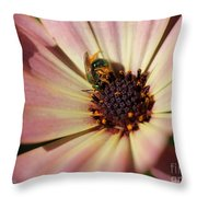 Osteospermum Named Sunadora Palermo Throw Pillow