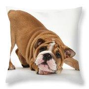 Playful Bulldog Pup Throw Pillow