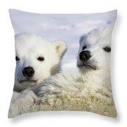 Polar Bear Ursus Maritimus Three Throw Pillow